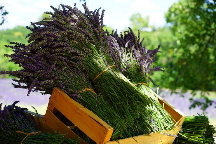 Biljke i voce koje pospjesuje probavu Ljekovito bilje