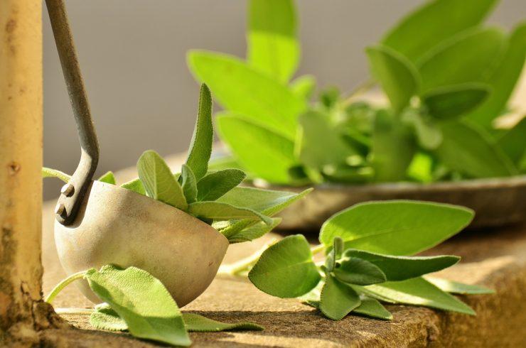 Kako izgleda i kako pripremiti lijek od kadulje Ljekovito bilje
