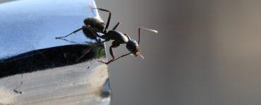 Kako osloboditi kuhinju od mrava Mravi u kuci