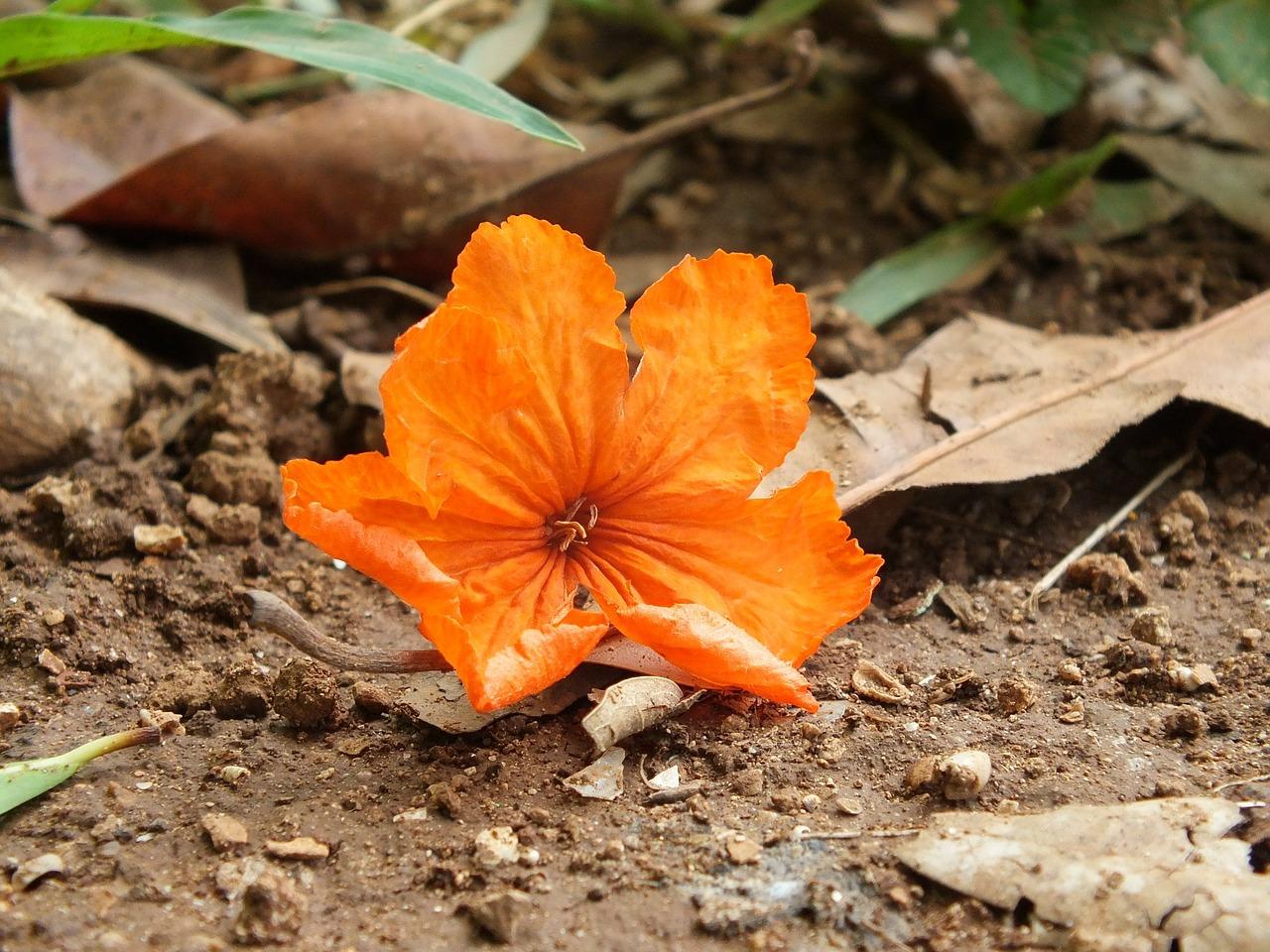 Kako tlo odrzavati vlaznim i bez korova - MALCIRANJE