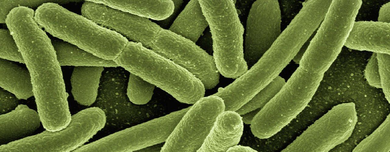 escherichia-coli-bolesti-infekcije-mokracnog-sustava-kako-hr