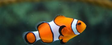 hobi-akvaristika-tropske-i-hladnovodne-ribice