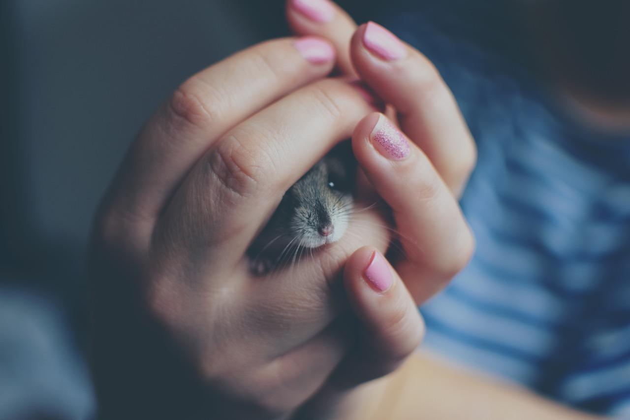 kako-drzati-miseve-kao-kucne-ljubimce-briga-o-misevima-kako-hr