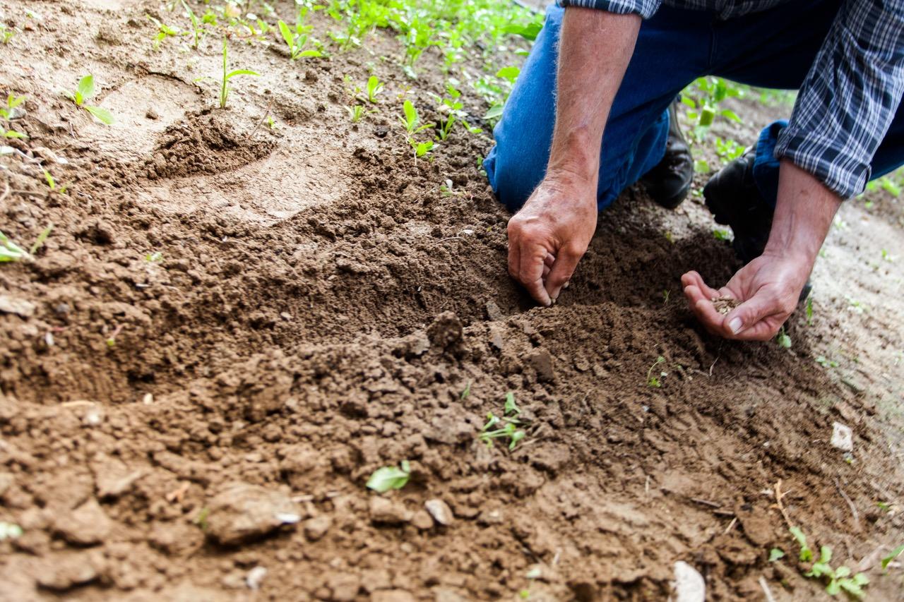 kako-pripremiti-vrt-za-proljece-nakon-zime-kako-hr