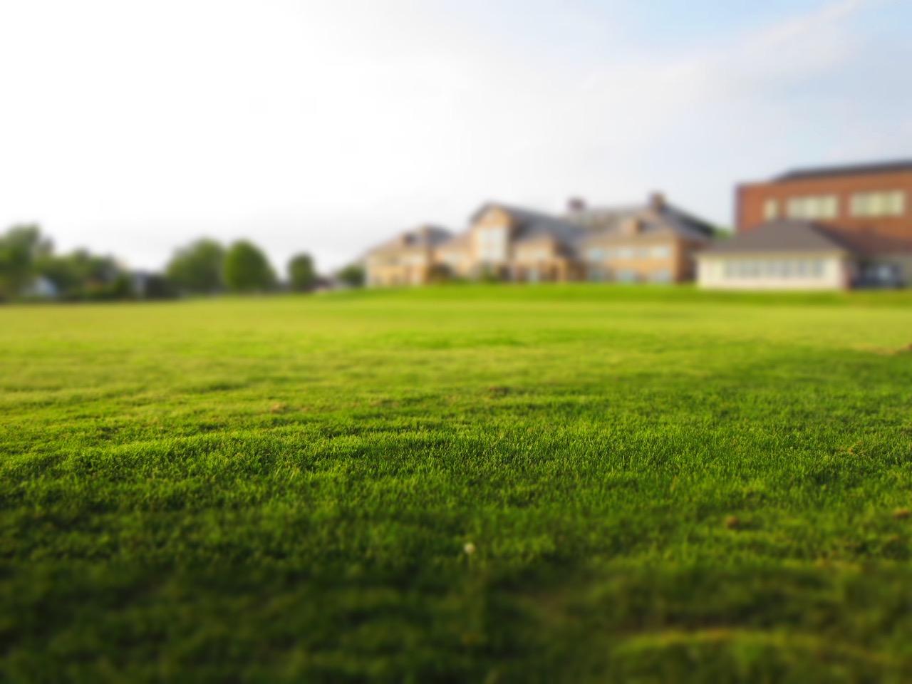 kako-se-rijesiti-neugodnih-mrlja-na-travnjaku-prouzrokovanih-glistama-kako-hr
