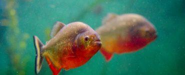 opremanje akvarija akvaristika