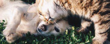 ozljede psa mačke